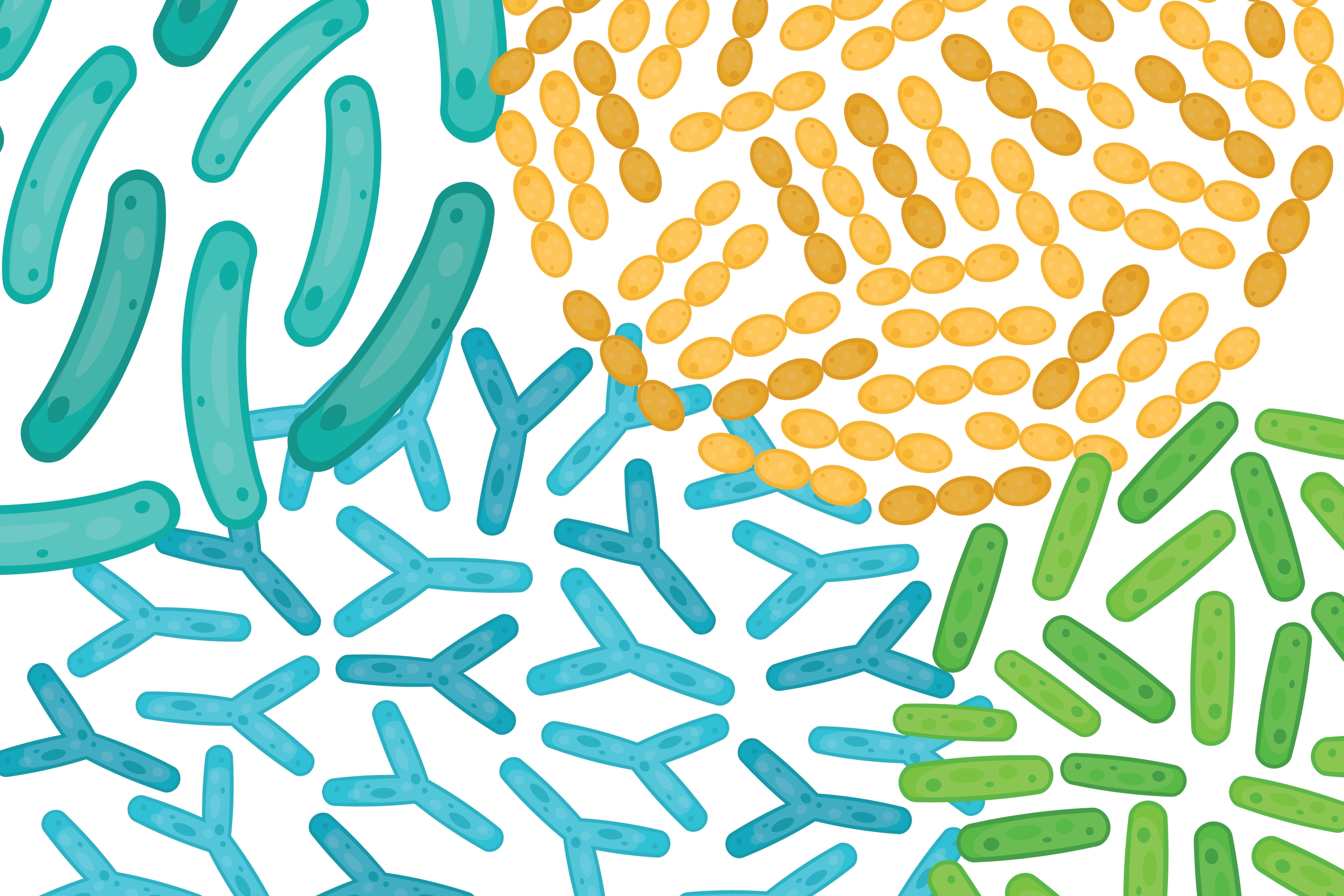 Illustration of probiotics at a cellular level.
