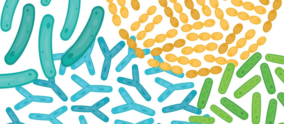 Illustration of probiotics at a cellular level.